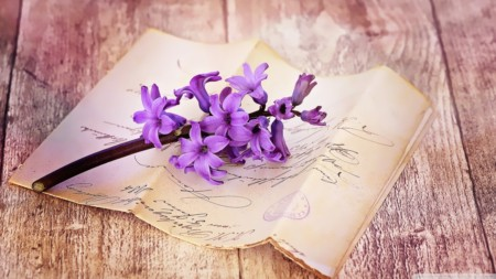 fresh_hyacinth_on_table-wallpaper-1280x720