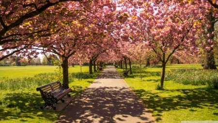 park_alley_springtime-wallpaper-1280x720