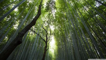 giant_bamboos-wallpaper-1280x720